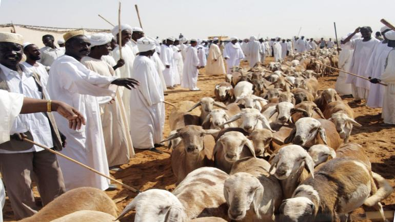 Hundreds of sheep run during a special celebration at Moelh market, the largest market to exhibit healthy animals, in Khartoum, Sudan, Wednesday Dec 5, 2007 after Sudanese Undersecretary of the Ministry of animal resource , Prove Bashir Taha, announced that Sudan is free of Rift valley fever or hemorrhagic fever. (AP Photos/Abd Raouf)